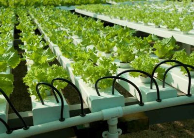 Jacks Farms Hydroponics